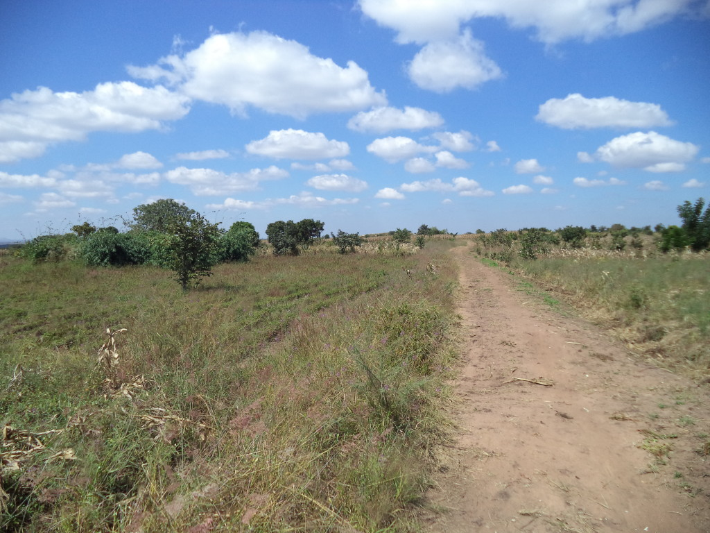 The road to Tambala village.